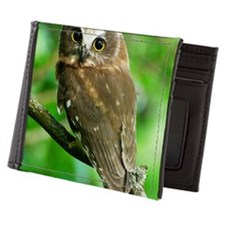 Juvenile Northern Saw-whet owl with bi Mens Wallet
