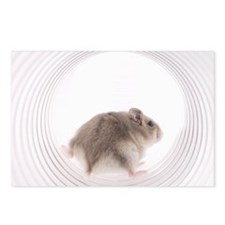 Grey mouse walking out of Postcards (Package of 8)