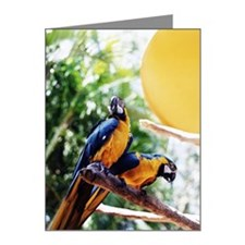 Blue and Gold Macaws Ara Ara Note Cards (Pk of 10)