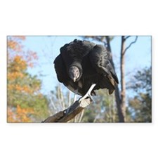 Intense black vulture Decal