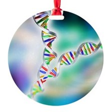 DNA replication Ornament