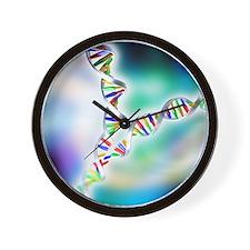DNA replication Wall Clock