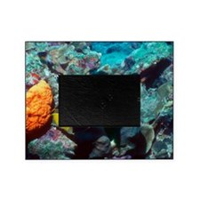 Rock beauty angelfish Picture Frame