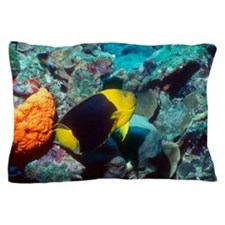 Rock beauty angelfish Pillow Case