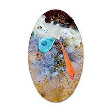 Ring-eye pygmy goby Wall Decal
