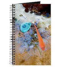 Ring-eye pygmy goby Journal