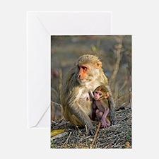 Rhesus monkeys Greeting Card