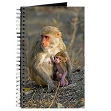 Rhesus monkeys Journal