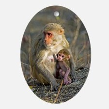 Rhesus monkeys Oval Ornament