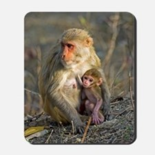 Rhesus monkeys Mousepad