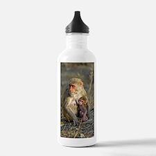 Rhesus monkeys Water Bottle