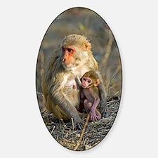 Rhesus monkeys Decal