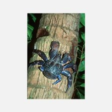 Robber crab Rectangle Magnet