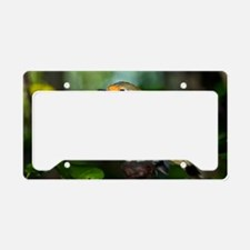 Robin License Plate Holder