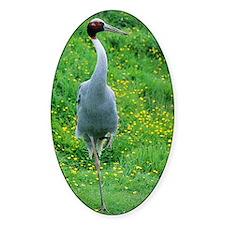 Sarus crane Decal