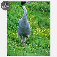 Sarus crane Puzzle