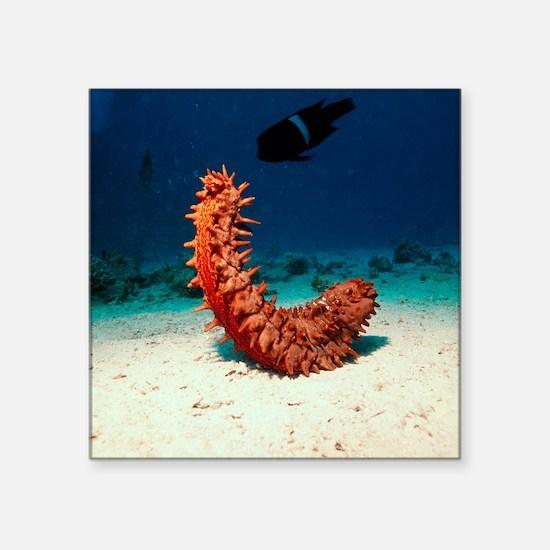 """Sea cucumber Square Sticker 3"""" x 3"""""""