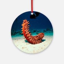 Sea cucumber Round Ornament