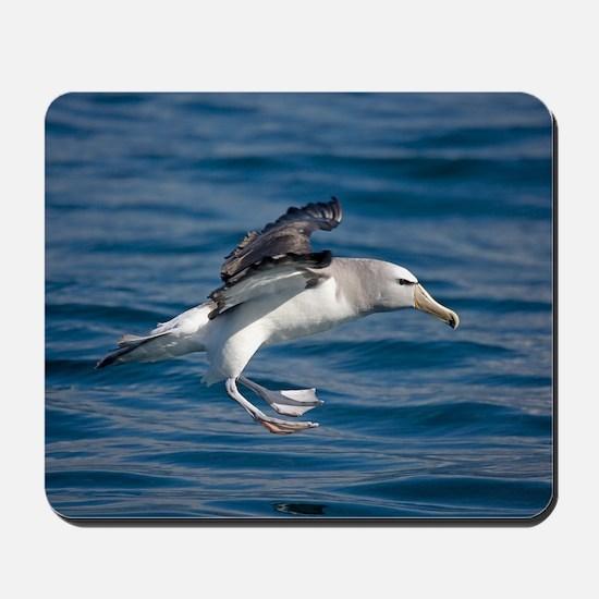 Salvin's albatross Mousepad
