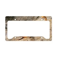 Scorpion License Plate Holder