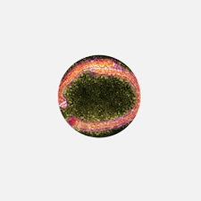 Ebola virus particles, TEM Mini Button