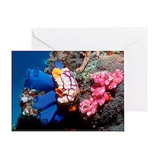 Sea squirts Greeting Card
