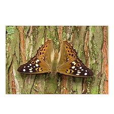 Butterfly : Hackberry Emperor Postcards