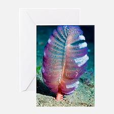 Sea pen Greeting Card