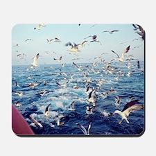 Seagulls Mousepad