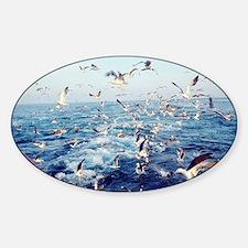 Seagulls Sticker (Oval)