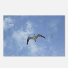Lone Seagull Postcards (Package of 8)