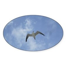 Lone Seagull Decal
