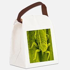 SEM of a bird cherry aphid feedin Canvas Lunch Bag