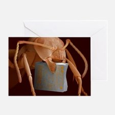 SEM of ant with chip Greeting Card