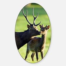 Sika deer Sticker (Oval)