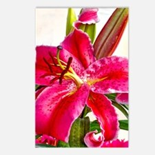 Bright Red Lily Postcards (Package of 8)