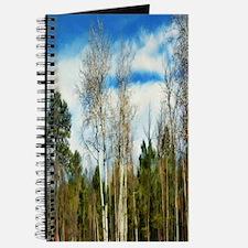 aspen - pine forest Journal