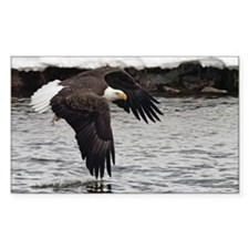 Eagle, Fish in Talons Decal