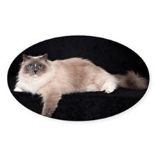 Ragdoll Wall Calendar Decal