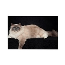 Ragdoll Wall Calendar Rectangle Magnet