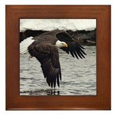 Eagle, Fish in Talons Framed Tile