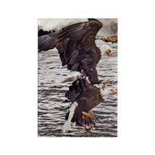 Striking, Bald Eagles Rectangle Magnet