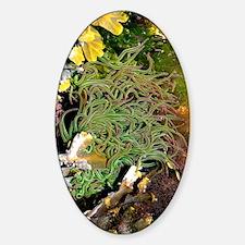 Snakelocks anemone Decal
