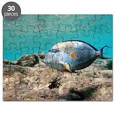Sohal surgeonfish Puzzle