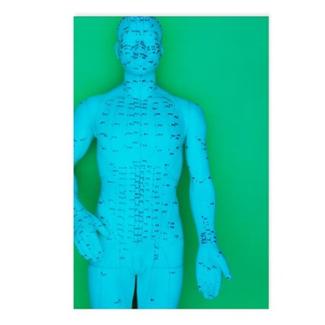 Acupuncture model Postcards (Package of 8)
