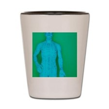 Acupuncture model Shot Glass