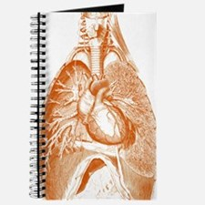Heart and lungs Journal