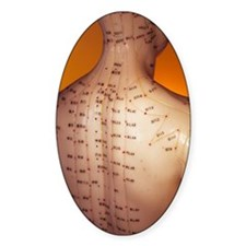 Acupuncture model Decal