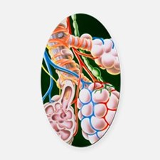 Illustration of lung bronchioles a Oval Car Magnet