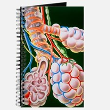 Illustration of lung bronchioles and alveo Journal